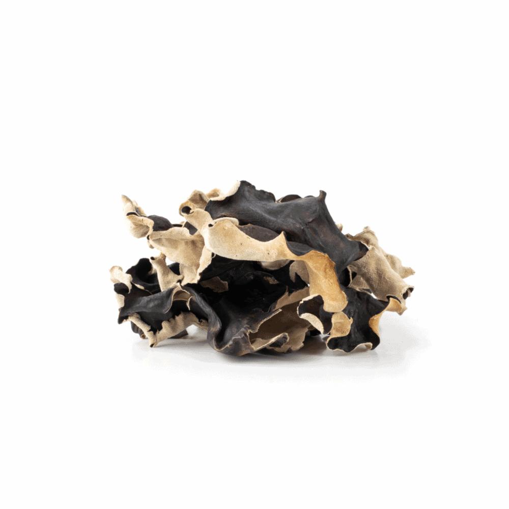 Fungus Prevention